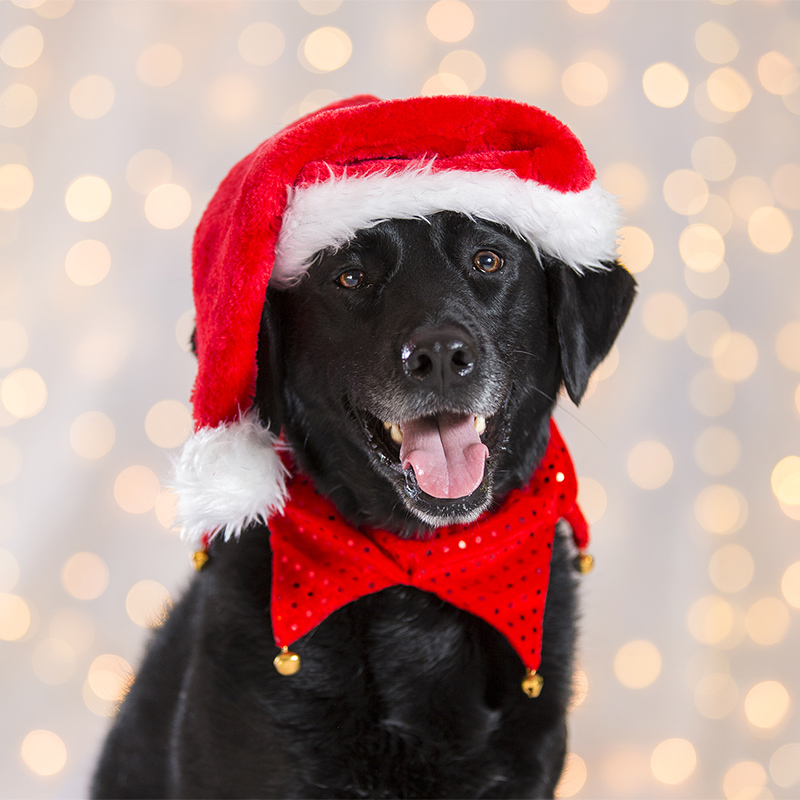 Rescue Dogs Christmas Cards Pack Of 12 Rescue Hub