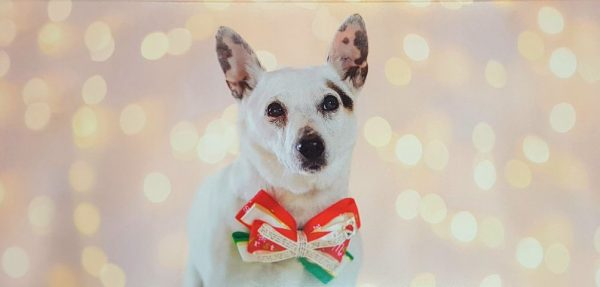 Rescue Hub Christmas Cards