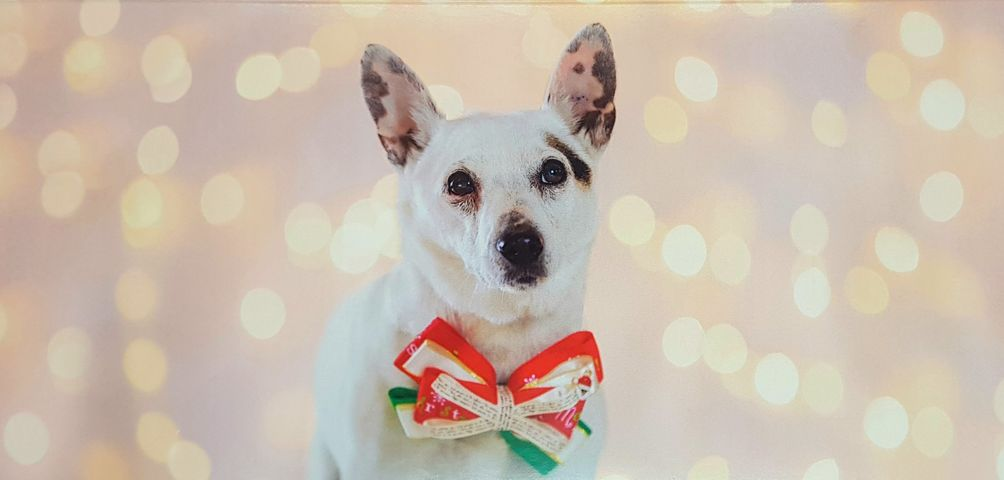 Rescue Hub Christmas Cards